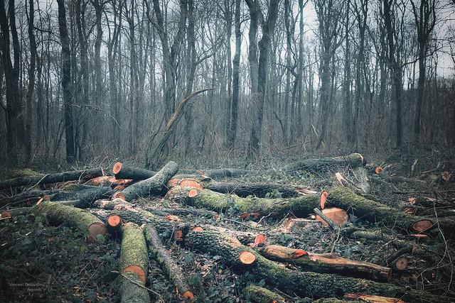 deforestation-affect-climate-change