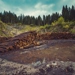 7 Fantastic Solutions to Deforestation