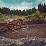 7 Fantastic Solutions to Deforestation