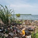 Terrible Effects of Agricultural Pollution