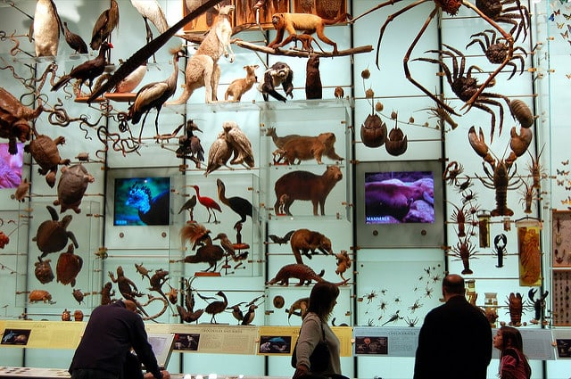 biodiversity-mounted-on-a-wall