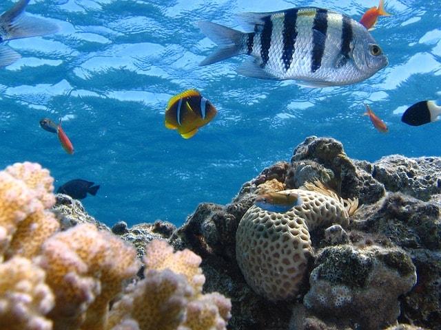 fish-ocean-riff-sea-marine-biome-ecosystem
