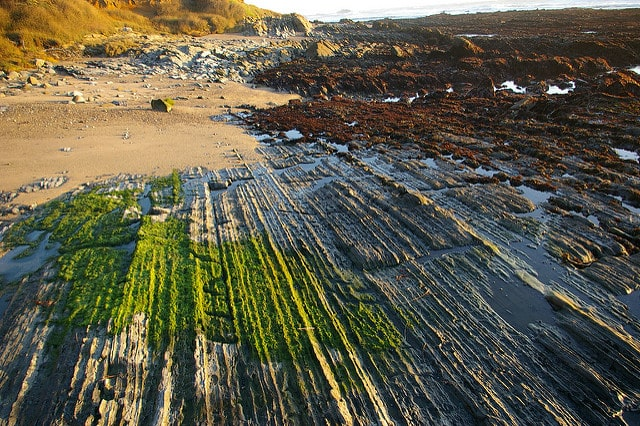 sedimentary-rock-pescadero-point