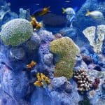 30+ Extraordinary Ways to Protect Coral Reefs
