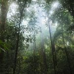 What are Rainforests, Importance of Rainforests and Reasons For Their Loss and Destruction