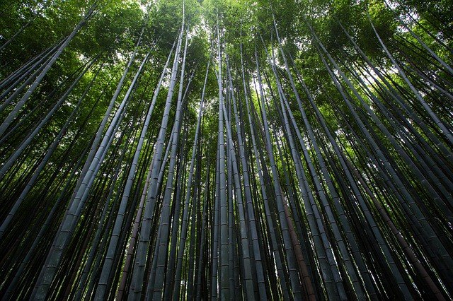 plants-trees-bamboo-slender-thin