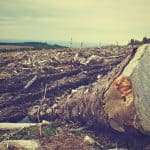 What are Causes and Effects of Environmental Degradation?