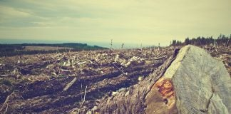 deforestation-forest-wood-cut