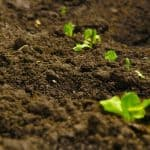 What is Soil, its Importance and What Are Different Layers of Soil