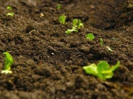 green-landscape-tree-nature-soil