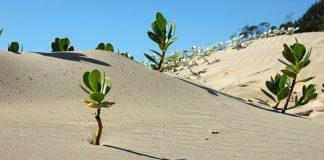 africa-landscape-desert-scenery