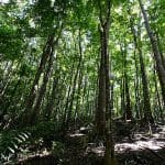 Advantages and Importance of Reforestation