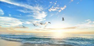 beach-birds-dawn-dusk-hd-wallpaper