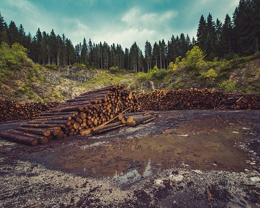 forestry-logging-deforestation