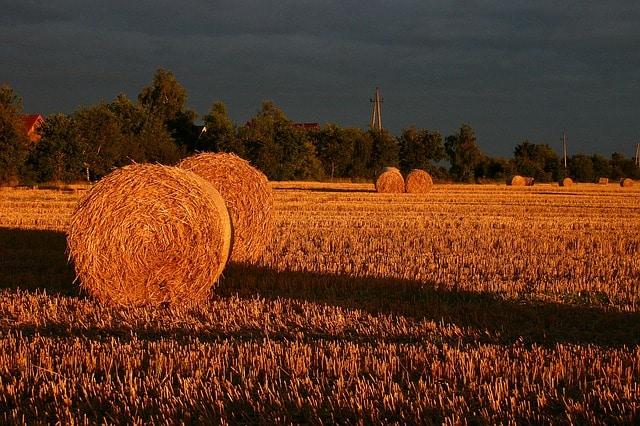 summer-straw-field-sunset