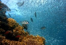 fish-underwater-diving-water