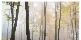 forest-light-mood-biome