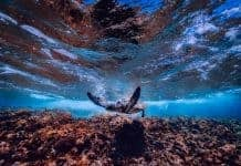 sea-ocean-underwater-turtle