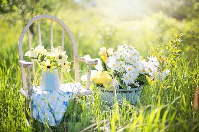 summer-still-life-daisies-yellow-garden