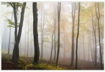 autumn-fog-forest