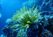 green-coral-reef-under-water