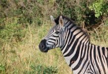 south-africa-wild-nature-wildlife