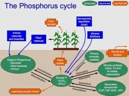 Phosphorus_Cycle
