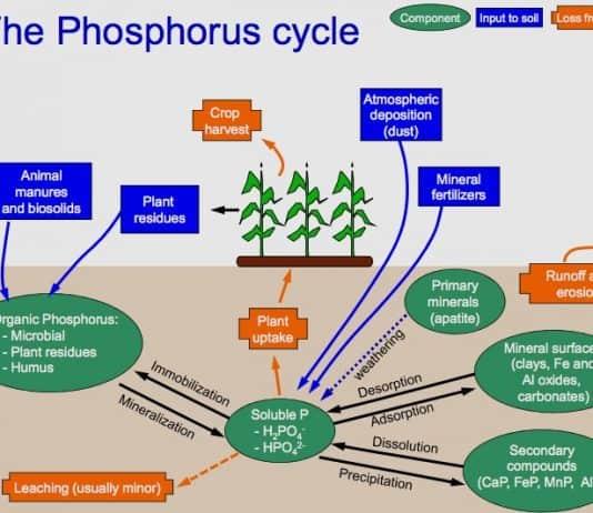Phosphorus_Cycle