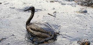 Black Sea Oil Spill