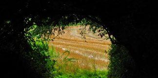 landscape-field-nature-agriculture