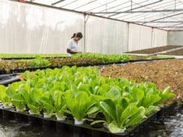 conservatory-agriculture-aquaculture