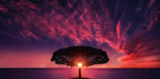 tree-sunset-amazing-beautiful-island