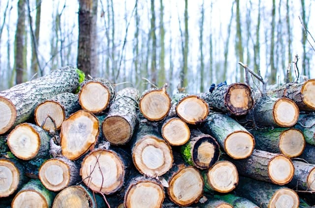 wood-logs-lumber-woodpile-firewood
