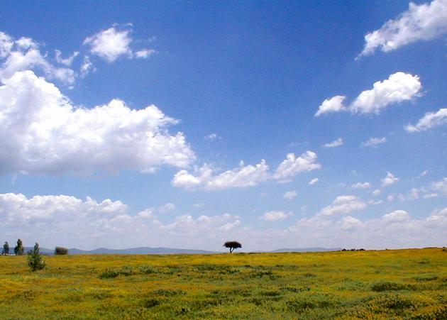 Mexican Plateau
