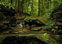 25+ Fascinating Rainforest Facts For Kids You Must Know