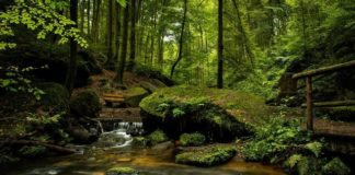jungle-forest-trees-green-nature