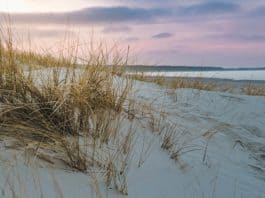 baltic-sea-sand-dune-grass-beach-sea