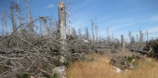 dying-tree-dead-wood-dead-plant-acid-rain