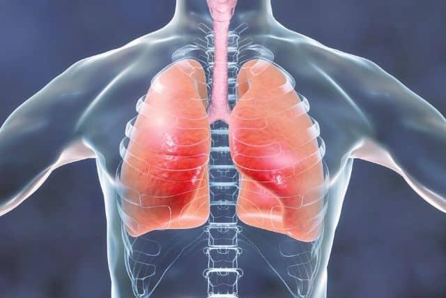 human-respiratory-system