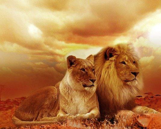lion-safari-africa-landscape