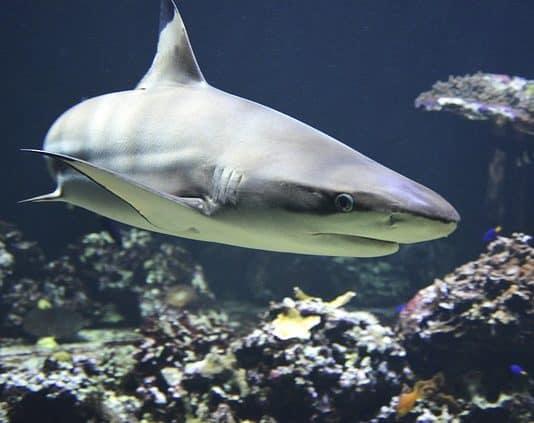 shark-hai-dangerous