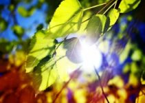 Can Photosynthesis Occur Without Oxygen?