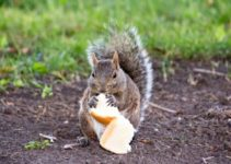 Can Squirrels Eat Bread? (And Which Foods to Avoid)